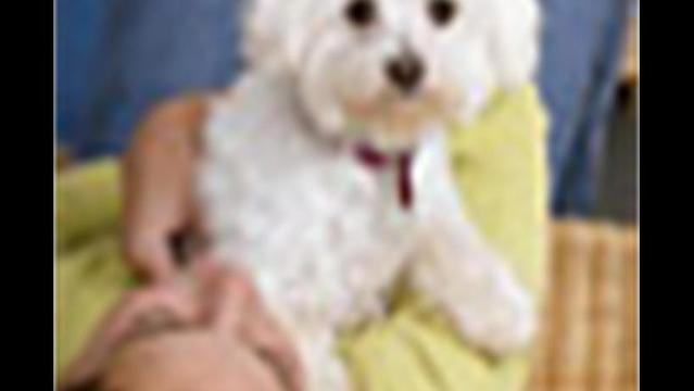 Study Questions Claims About Hypoallergenic Dogs