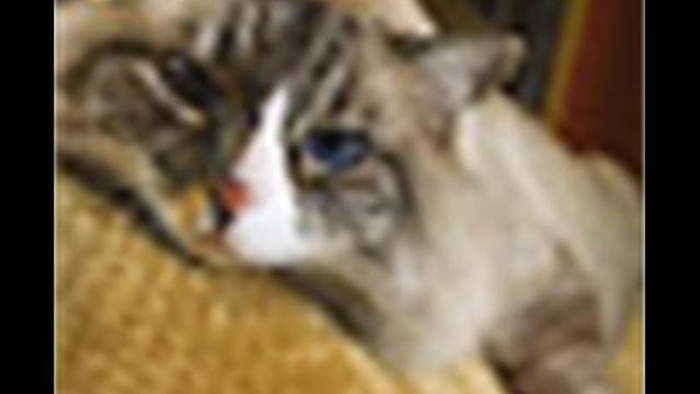 Pork-Cat Syndrome an Under-Recognized Allergy