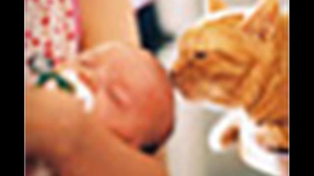 Pets May Reduce Children's Allergy Risk