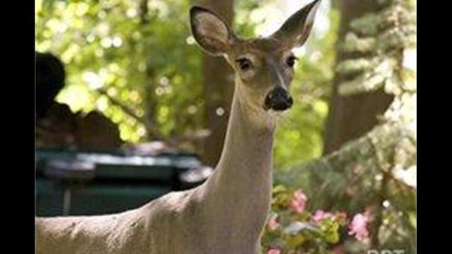 Deer dangers you don't know - and what to do about them