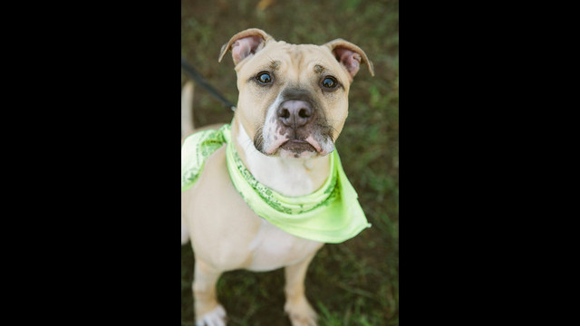 Help these dogs find a 'furever' home!