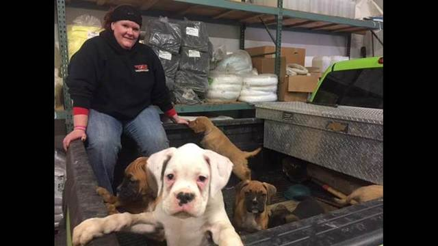 Update on puppies recovering from accident on I-86 East in the Southern Tier