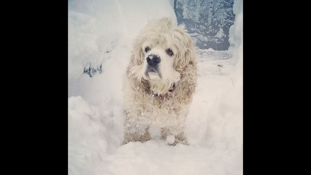 Puppy in the snow - Melissa Catherine Polhamus