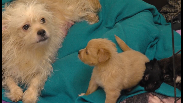 Animal abuser registry proposed for Onondaga County