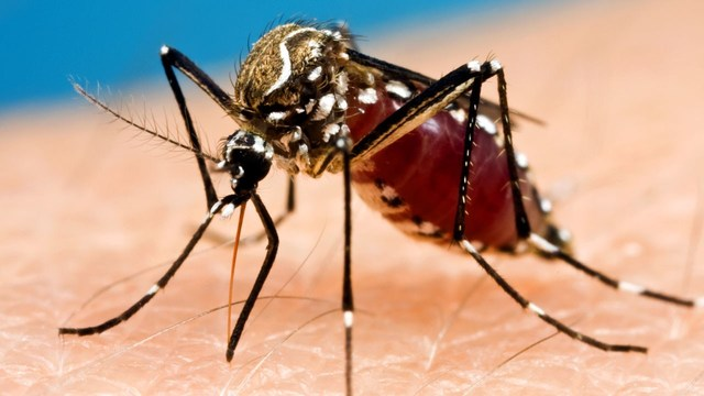 Oswego County reports first human case of West Nile virus in 2017