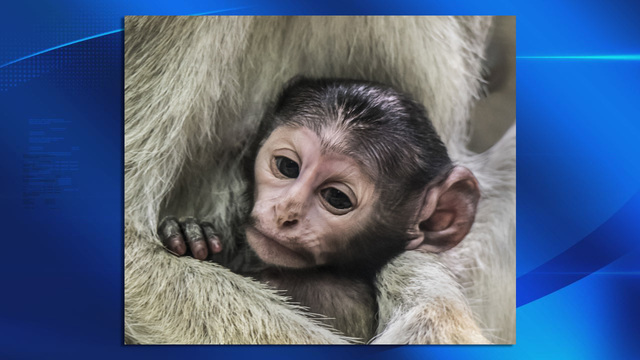 Zoo holding naming contest for new baby patas monkey