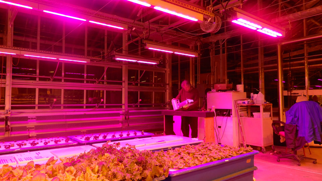 Syracuse startup developing LED lights for indoor farming - LOCALSYR